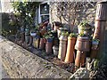 NY8355 : Chimney pots as planters by Oliver Dixon