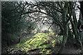 NY6423 : Footpath through Small Wood by Bob Jenkins