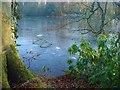 SM9618 : Frozen lake by Deborah Tilley