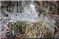 NY3617 : Ice Encrusted Grasses, Near Swart Beck by Mick Garratt