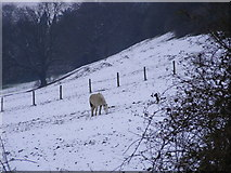 SO9194 : Snowy Field by Gordon Griffiths