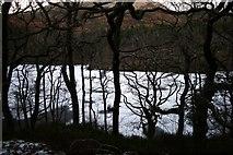 SH6441 : Hafod y Llyn by Barry Hunter