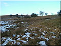 NY6515 : Access land, Hoff Moor by David Brown