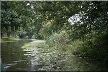 SS9712 : Grand Western Canal by Adrian Platt