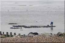 TQ1602 : Digging for Worms, Worthing Beach, West Sussex by Roger  Kidd