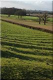 SO8843 : Ridge and furrow field by Philip Halling