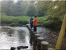 NZ0161 : Stepping stones over Riding Mill burn by Freethinker