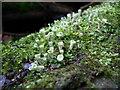 SE7729 : Lichen and moss by bernard bradley