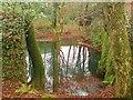 SM9618 : Stagnant pools by Deborah Tilley