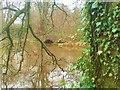 SM9618 : Stone bridge by Deborah Tilley