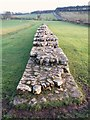 NY8871 : Hadrian's Wall at Black Carts by Mike Quinn