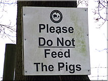 TM1440 : Do Not Feed The Pigs, apart from Jimmy by Keith Evans