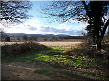 SU7824 : Field to the west of Sussex Border Path by Chris Gunns