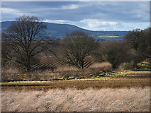 SU7824 : West of the Sussex Border Path by Chris Gunns