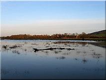 TQ5203 : Flooded Field near Milton Court Farm by Simon Carey
