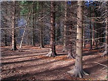 J3269 : Woodland near the Lagan towpath by Rossographer