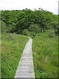 NM8464 : Boardwalk, Ariundle by Richard Webb