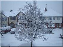 TQ4387 : Snow-covered tree by Robert Lamb