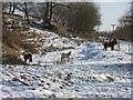 SD7014 : Longworth Clough Ponies by John Tustin