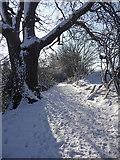 TQ2996 : Oak tree, Trent Park, Enfield by Christine Matthews