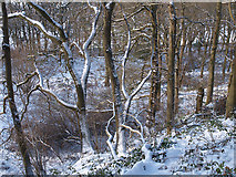 NZ5712 : Newton Wood in the snow by Stephen McCulloch