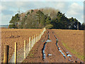 ST0974 : Track toward woods at Haelfaes near Cardiff by Mick Lobb