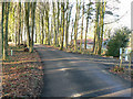ST1074 : Tree lined lane adjacent to the Natural Burial Ground near Cardiff by Mick Lobb