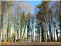 ST0974 : Car park at the Natural Burial Ground near Cardiff by Mick Lobb