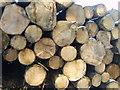 SD3987 : Log Pile by Michael Graham