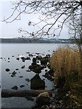 SD3898 : Windermere Shore by Michael Graham
