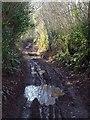 SX9169 : Green lane to Rocombe by Derek Harper