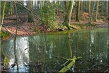 SU6779 : Pond in Nuney Copse by Graham Horn
