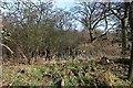 SO7943 : Pond near Arles Wood by Bob Embleton