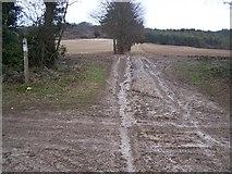 TQ8554 : Bridleway junction on North Downs Way by David Anstiss