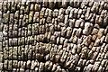 SO7943 : End Grain by Bob Embleton