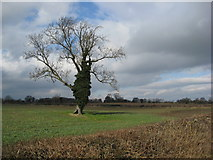 SK4976 : Clowne - View across fields from Hickingwood Lane by Alan Heardman