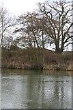 SU5985 : Pillbox by  a tree by Bill Nicholls