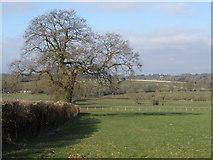 ST2113 : Looking towards Churchstanton Hill by Roger Cornfoot