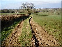 ST2114 : Fields, near Churchstanton Hill by Roger Cornfoot