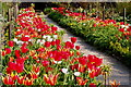 C0220 : Glenveagh National Park - Flowers in Walled Garden by Suzanne Mischyshyn