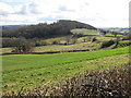 SO4322 : Sheep pasture above the Monnow Valley by Pauline E
