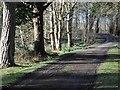 NR3362 : Bridgend Woods by Patrick Mackie
