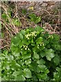 SX9065 : Alexanders by the track by Derek Harper