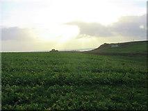 SH3368 : St Cwyfan's Church viewed across a field of kale by Eric Jones
