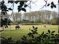 SP9307 : Cholesbury Camp – A Paddock with Horses by Chris Reynolds