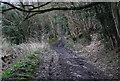 SU7530 : Standfast Lane (3) by N Chadwick