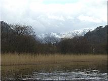 NY3916 : Reeds at the head of Ullswater by Andy Waddington