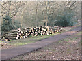 TQ4195 : Epping Forest: new log pile by Stephen Craven