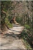 SX4268 : Woodland Footpath by Tony Atkin