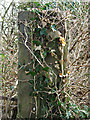 TG2736 : Ivy-clad gate post by Evelyn Simak